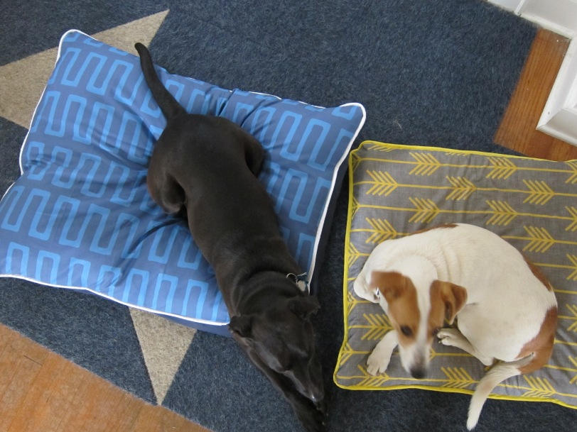 dogs on DIY dog beds