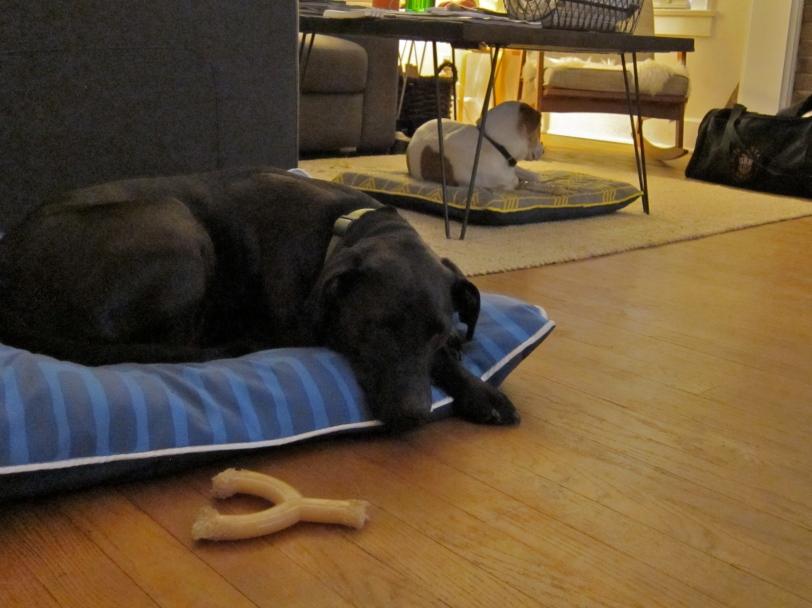 dog beds at night
